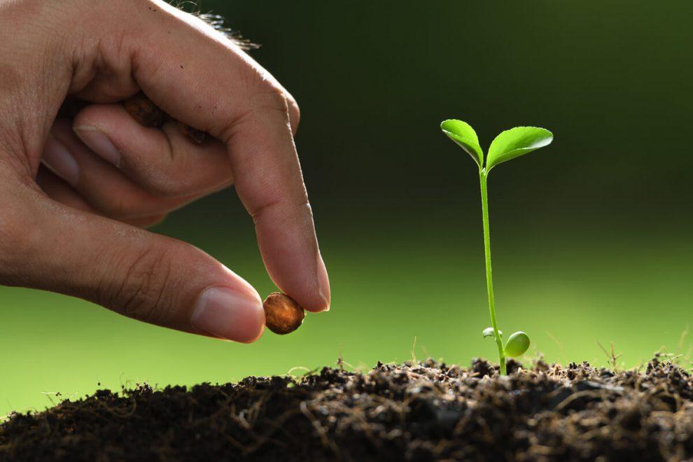 plant-a-seed.jpg